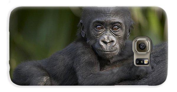 Western Lowland Gorilla Gorilla Gorilla Galaxy S6 Case by San Diego Zoo