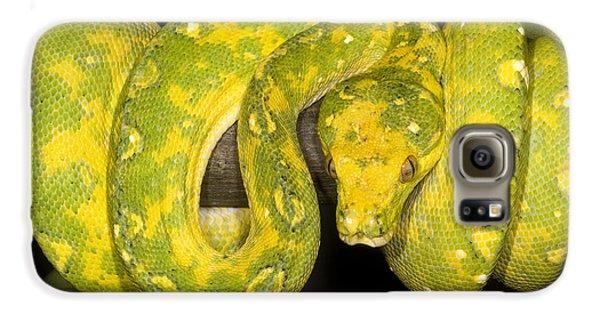 Green Tree Python Galaxy S6 Case by Dante Fenolio