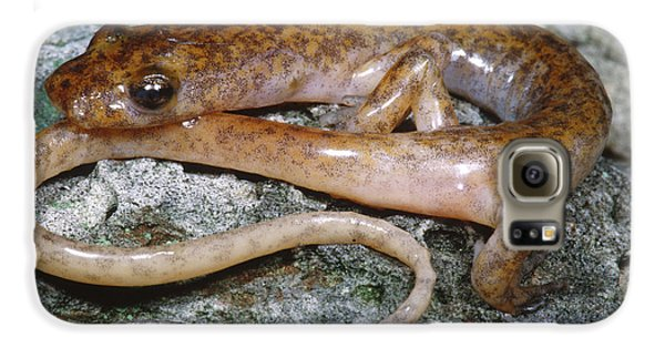 Cave Salamander Galaxy S6 Case by Dante Fenolio