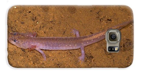 Ozark Blind Cave Salamander Galaxy S6 Case by Dante Fenolio