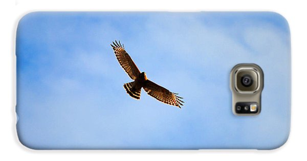 Red Shouldered Hawk In Flight Samsung Galaxy Case by Jai Johnson