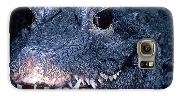 African Dwarf Crocodile Galaxy S6 Case by Dante Fenolio