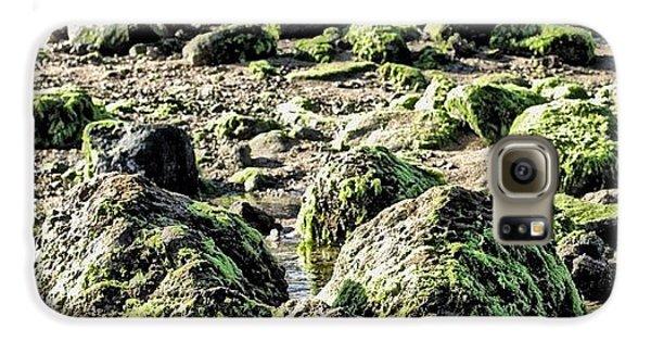 Algae Rocks Samsung Galaxy Case by Arya Swadharma