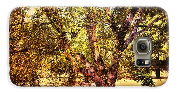 Birch Tree Samsung Galaxy Case by Jai Johnson