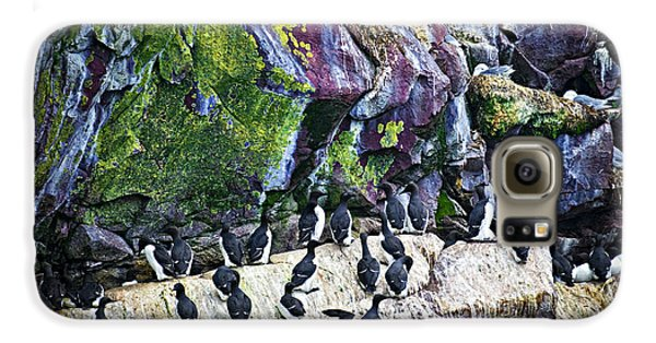 Birds At Cape St. Mary's Bird Sanctuary In Newfoundland Galaxy S6 Case by Elena Elisseeva
