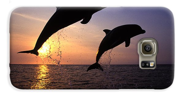 Bottlenose Dolphins Galaxy S6 Case by Francois Gohier and Photo Researchers