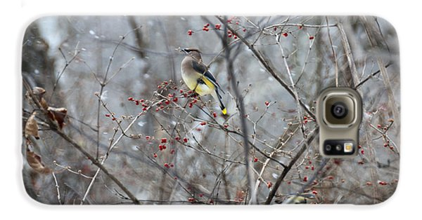 Cedar Wax Wing 3 Galaxy S6 Case by David Arment