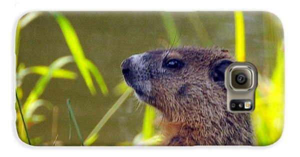 Chucky Woodchuck Galaxy S6 Case by Paul Ward
