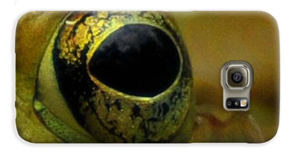 Eye Of Frog Galaxy S6 Case by Paul Ward
