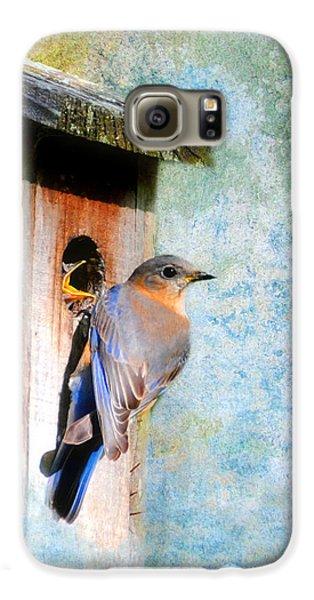 Female Eastern Bluebird At Nesting Box Samsung Galaxy Case by Jai Johnson