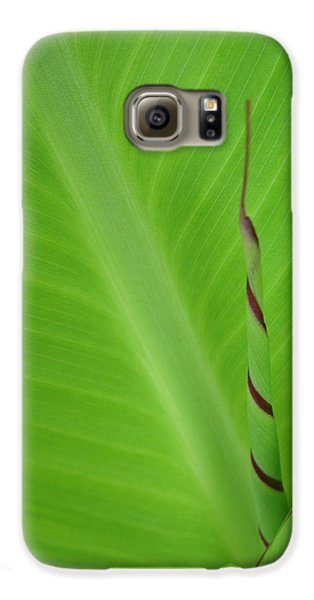 Green Leaf With Spiral New Growth Samsung Galaxy Case by Nikki Marie Smith