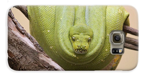 Green Tree Python Galaxy S6 Case by Suzanne Gaff