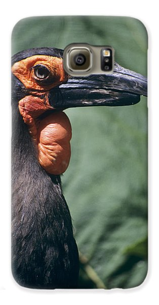 Ground Hornbill Head Galaxy S6 Case by David Aubrey