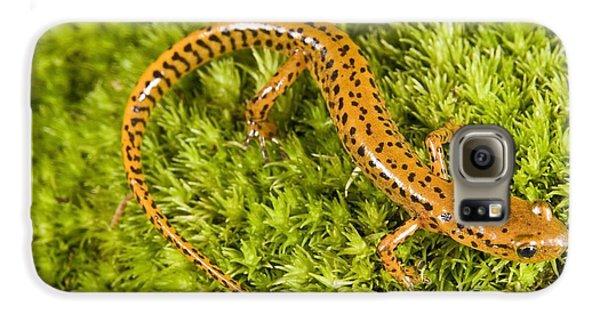 Longtail Salamander Eurycea Longicauda Galaxy S6 Case by Jack Goldfarb