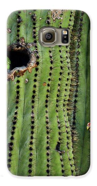 Lovebirds And The Saguaro  Galaxy S6 Case by Saija  Lehtonen