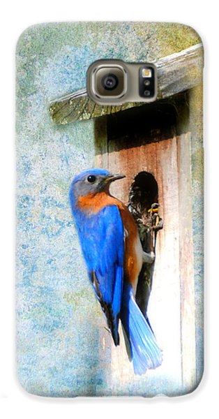 Male Eastern Bluebird At Nesting Box Galaxy Case by Jai Johnson