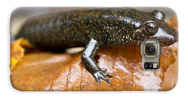Mountain Dusky Salamander Galaxy S6 Case by Dustin K Ryan