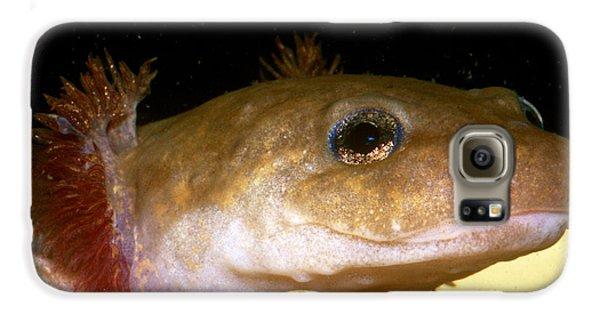 Pacific Giant Salamander Larva Galaxy S6 Case by Dante Fenolio