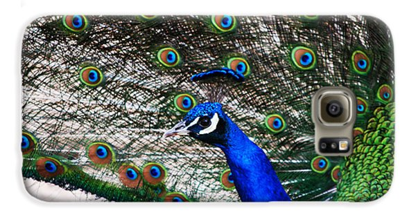 Proud Peacock Galaxy S6 Case by Sheryl Cox
