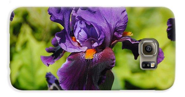 Purple And Orange Iris Flower Samsung Galaxy Case by Jai Johnson