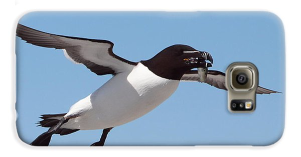 Razorbill In Flight Galaxy S6 Case by Bruce J Robinson