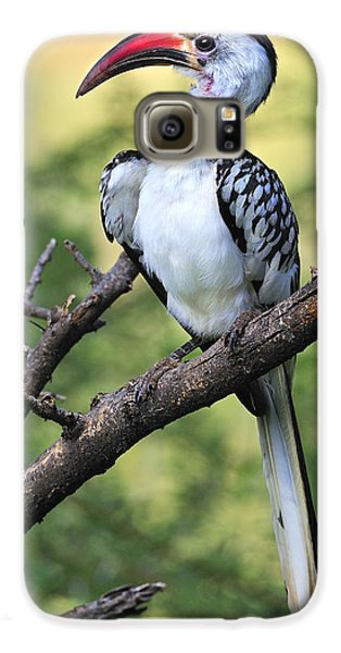Red-billed Hornbill Galaxy S6 Case by Tony Beck