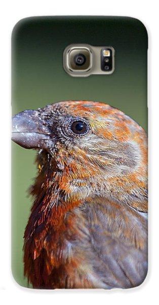 Red Crossbill Galaxy S6 Case by Derek Holzapfel