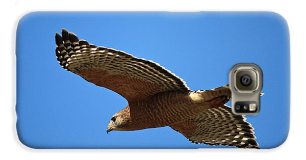 Red Shouldered Hawk In Flight Galaxy S6 Case by Carol Groenen