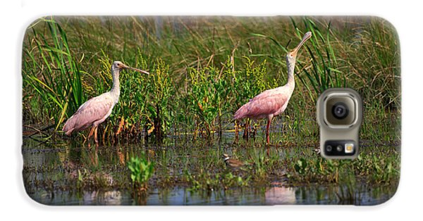 Roseate Spoonbills Galaxy S6 Case by Louise Heusinkveld