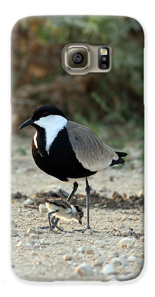 Spur-winged Plover And Chick Galaxy S6 Case by Photostock-israel