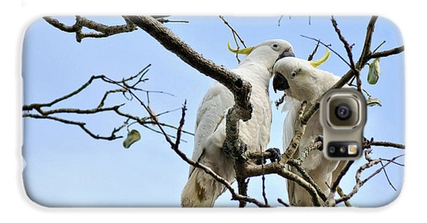 Sulphur Crested Cockatoos Galaxy S6 Case by Kaye Menner
