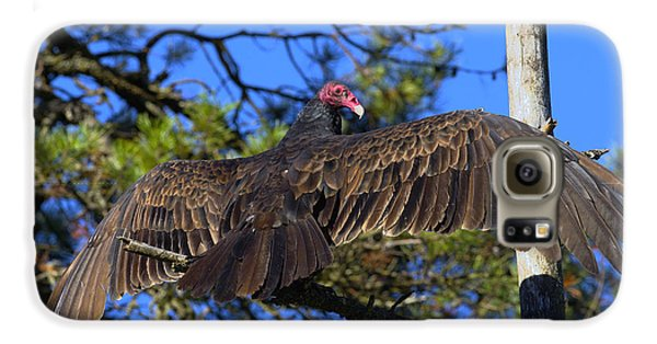 Turkey Vulture With Wings Spread Galaxy S6 Case by Sharon Talson