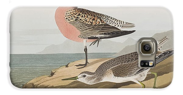 Red-breasted Sandpiper  Galaxy S6 Case by John James Audubon