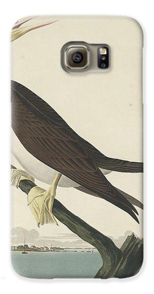 Booby Gannet Galaxy S6 Case by John James Audubon