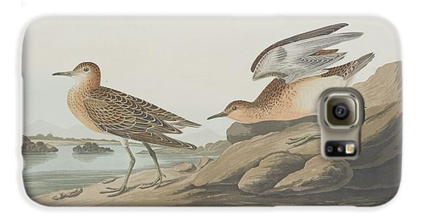Buff-breasted Sandpiper Galaxy S6 Case by John James Audubon