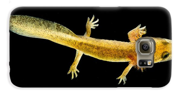 California Giant Salamander Larva Galaxy S6 Case by Dant� Fenolio