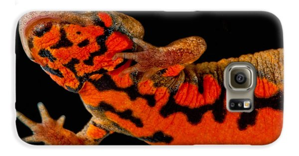 Chuxiong Fire Belly Newt Galaxy S6 Case by Dant� Fenolio