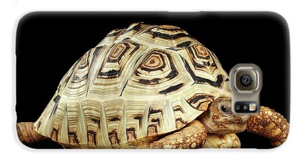 Closeup Leopard Tortoise Albino,stigmochelys Pardalis Turtle With White Shell On Isolated Black Back Galaxy S6 Case by Sergey Taran