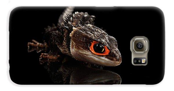 Closeup Red-eyed Crocodile Skink, Tribolonotus Gracilis, Isolated On Black Background Galaxy S6 Case by Sergey Taran