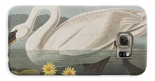 Common American Swan Galaxy S6 Case by John James Audubon