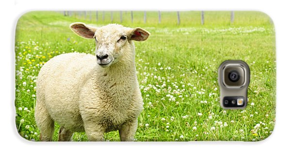 Cute Young Sheep Galaxy S6 Case by Elena Elisseeva