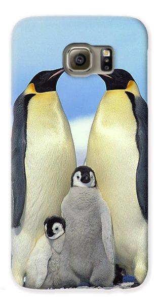 Emperor Penguin Aptenodytes Forsteri Galaxy S6 Case by Konrad Wothe