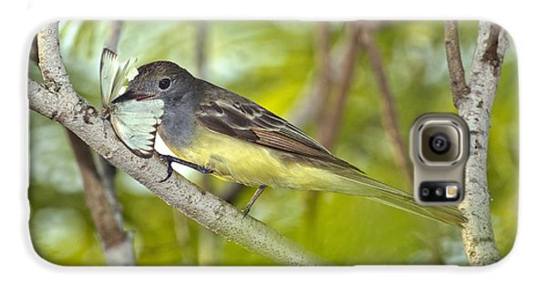 Great Crested Flycatcher Galaxy S6 Case by Anthony Mercieca