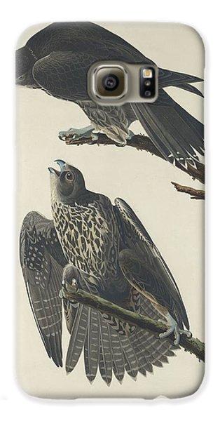 Labrador Falcon Galaxy S6 Case by John James Audubon