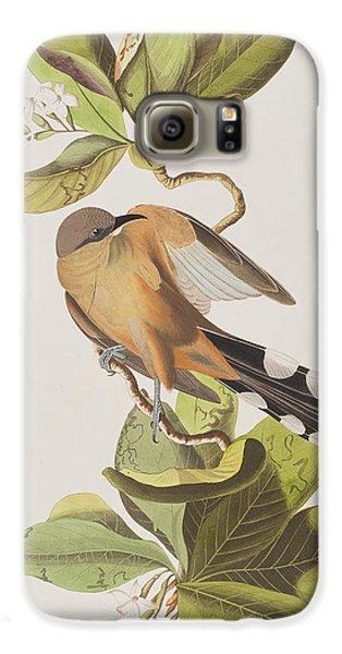Mangrove Cuckoo Galaxy S6 Case by John James Audubon