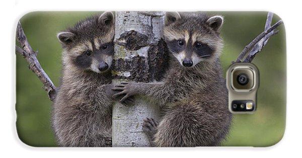 Raccoon Two Babies Climbing Tree North Galaxy S6 Case by Tim Fitzharris