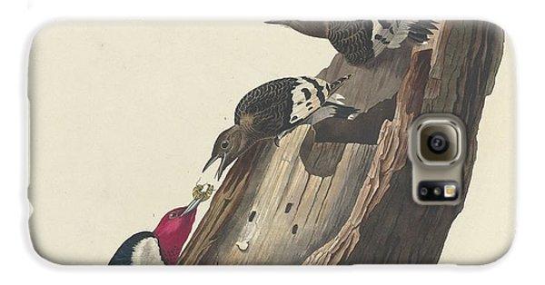 Red-headed Woodpecker Galaxy S6 Case by John James Audubon