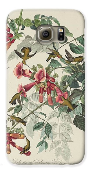 Ruby-throated Hummingbird Galaxy S6 Case by John James Audubon
