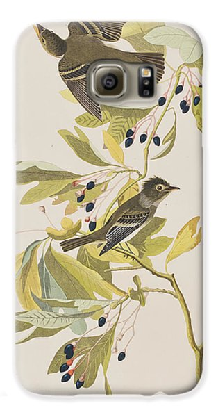 Small Green Crested Flycatcher Galaxy S6 Case by John James Audubon