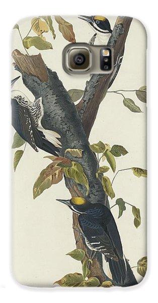 Three-toed Woodpecker Galaxy S6 Case by John James Audubon